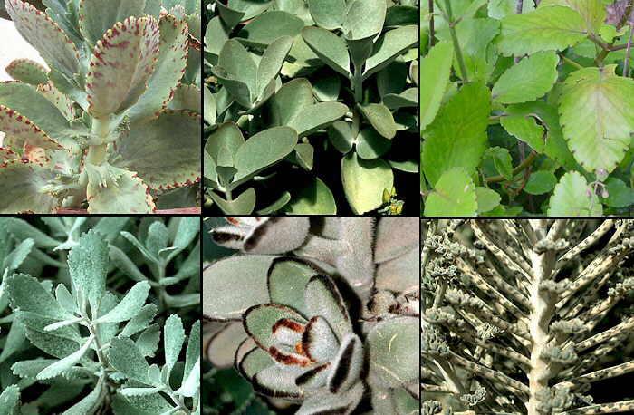 Vive Sana Plantas medicinales efectivas en el Tratamiento del Cáncer