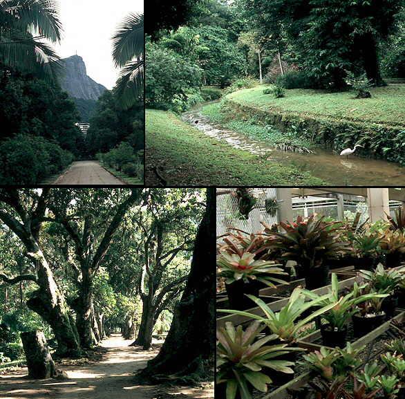 Opiniones de jard n bot nico de r o de janeiro for Caracteristicas de un jardin botanico