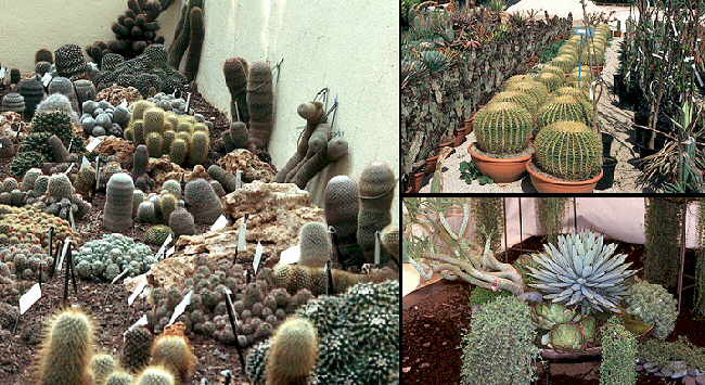 Ideas arreglos florales for Jardin cactus madrid