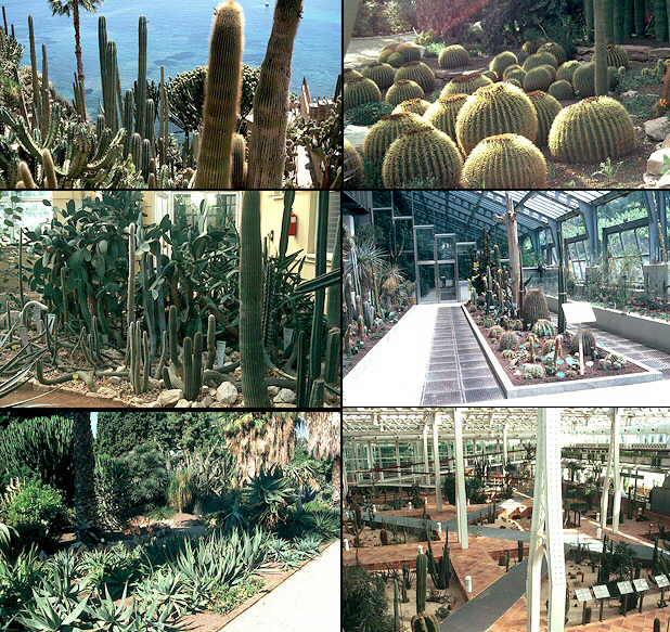 Cactus y suculentas - Jardin de cactus madrid ...