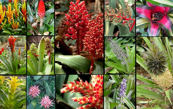 Fotograf as de plantas for Plantas tropicales de exterior