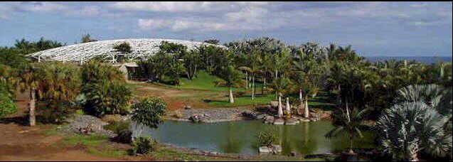 El jardin botanico del palmetum de santa cruz de tenerife for Jardin botanico de tenerife