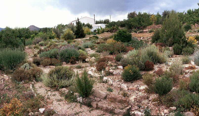 Plantas para xerojardiner a - Jardines mediterraneos fotos ...