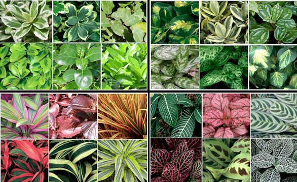 Hojas de plantas con su nombre  Imagui