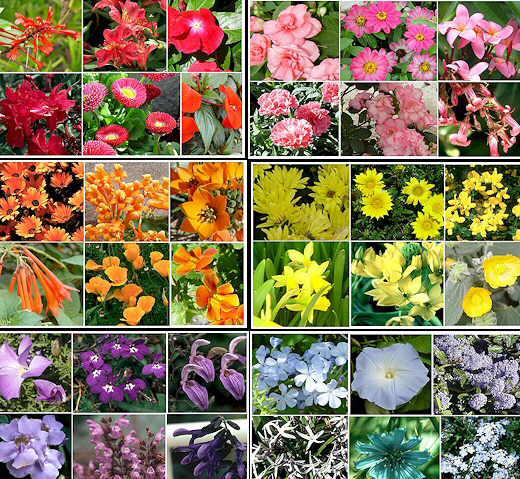 Plantas ornamentales con sus nombres lamina imagui for 5 nombres de plantas ornamentales