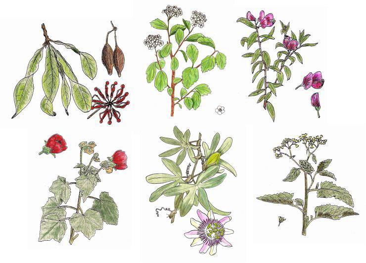 Dibujos de plantas for Plantas ornamentales para colorear