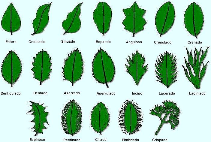 Las hojas de los arboles for Tipos de arboles y su significado